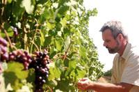rich_vineyard1