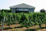 vineyard48_1