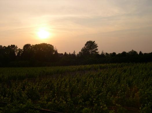 wolffer_sunset