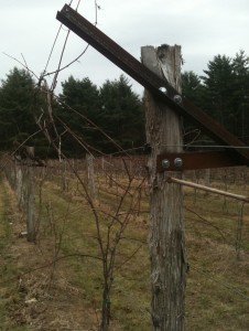 Modified Geneva Double Curtain - Hid-In-Pines Vineyard