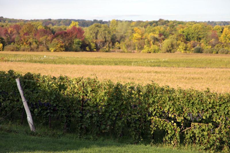 Len_harvest2012_01