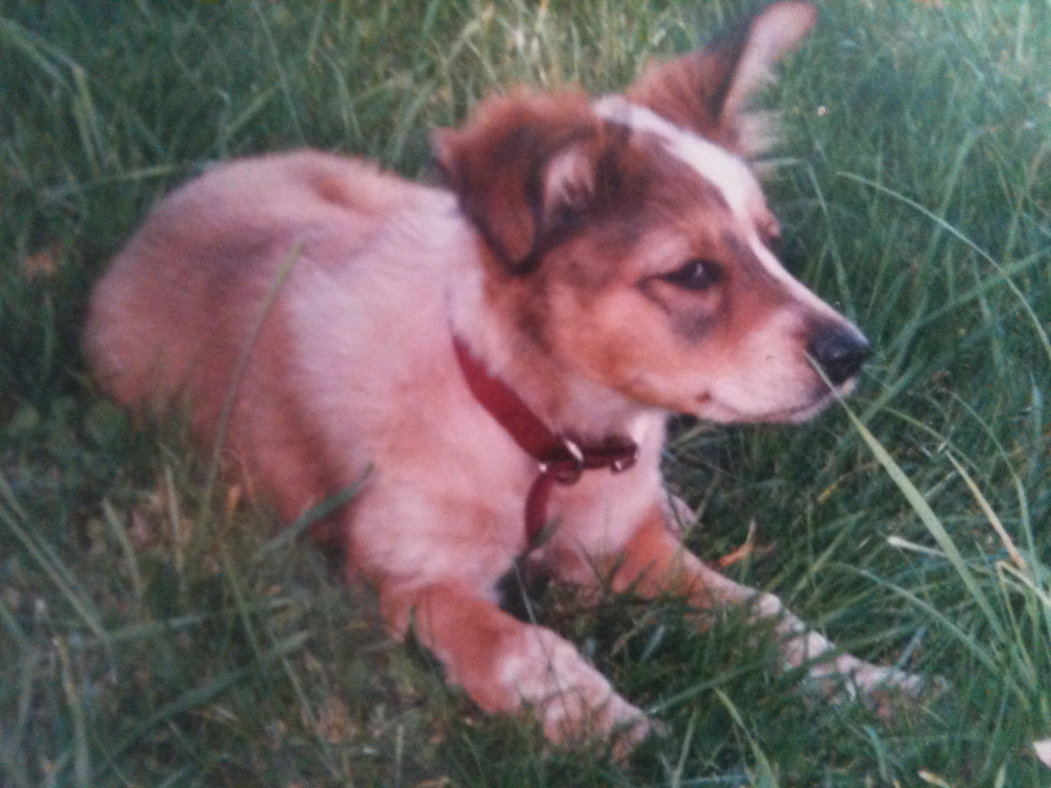 Mitchell as a puppy