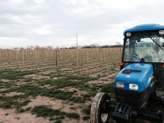 vineyard-southold-farm-cellar