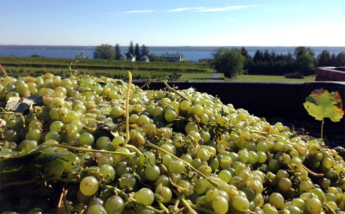Finger Lakes growers seek sustainable wine plan