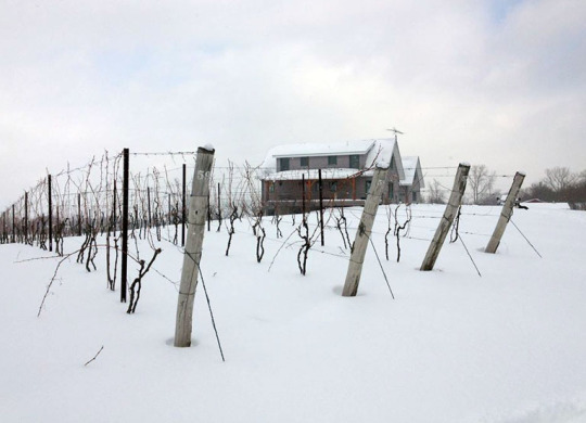Photo courtesy of Arrowhead Spring Vineyards
