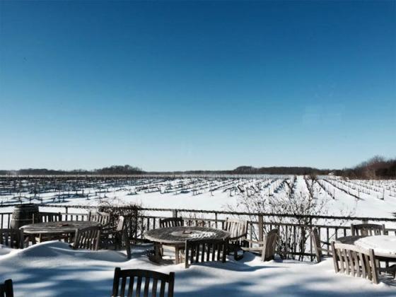 The winter view at Paumanok Vineyards