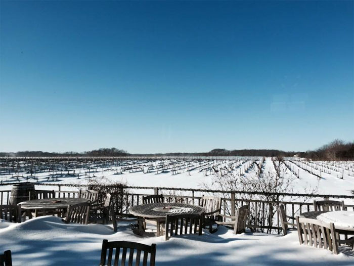 The winter view at Paumanok Vineyards