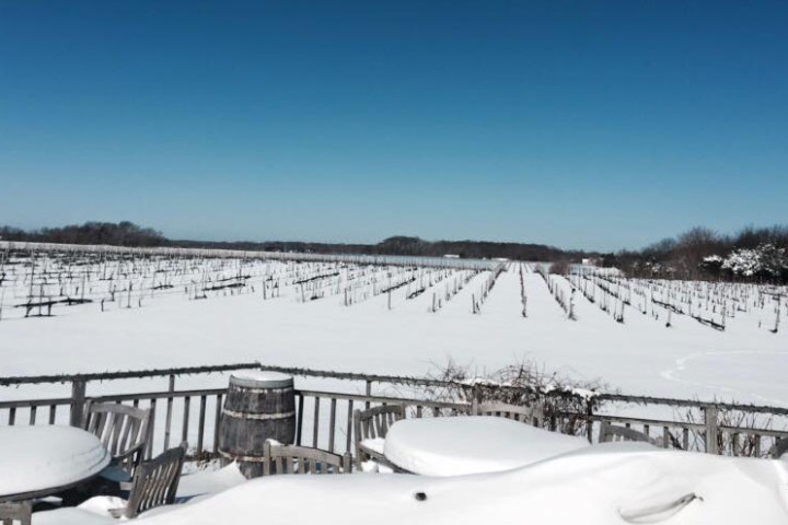 Photo courtesy of Paumanok Vineyards