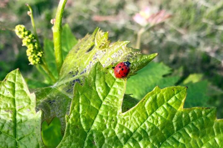 lady-bug-shinn