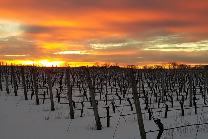 sunset-jamesport-vineyards