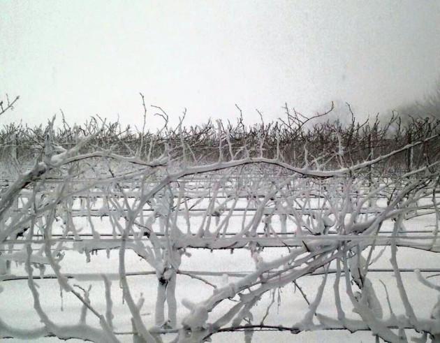 macari-snow