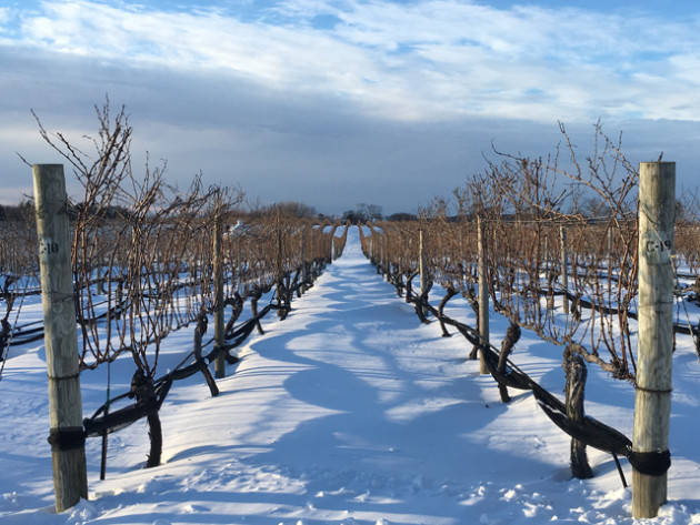 winter-wine-country
